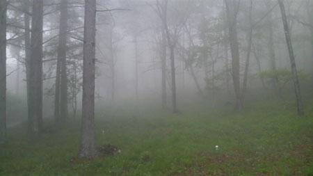 霧の八ヶ岳南麓